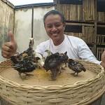 Pelanggan jualayamhias.com di Kalidoni daerah Palembang Sumatera Selatan Sukses Menetaskan Telur Ayam Hias dengan Mesin Penetas Buatan Sendiri
