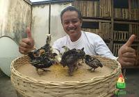 Pak Aliyanto Suskes Menetaskan Telur Ayam Hias