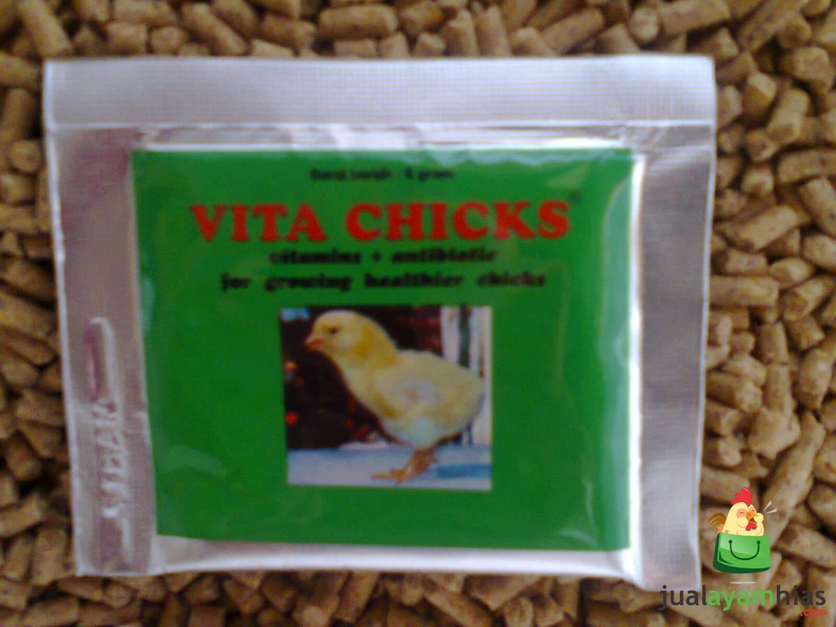 Cara Mempercepat Pertumbuhan Anak  Ayam dengan Serbuk Vita Chicks