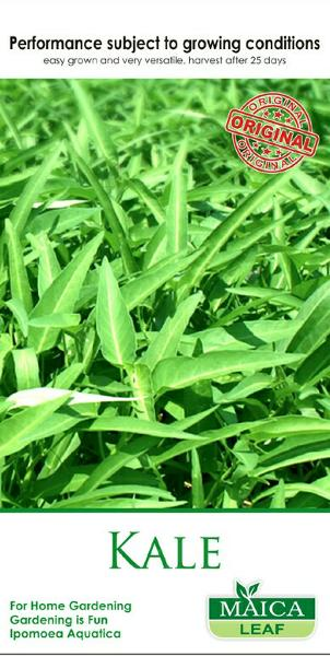 Benih Kangkung Maica Leaf