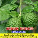 Jeruk Purut Berbuah