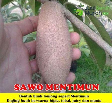Sawo Mentimun
