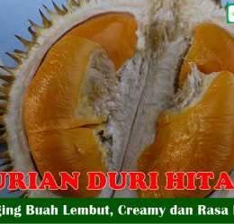 Buah Durian Duri Hitam