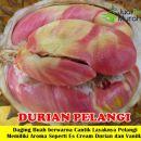 Buah Durian Pelangi Unggul
