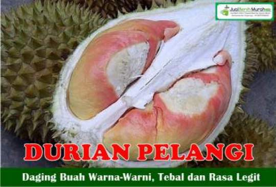 Buah Durian pelangi