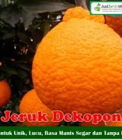 Buah Jeruk Dekopon