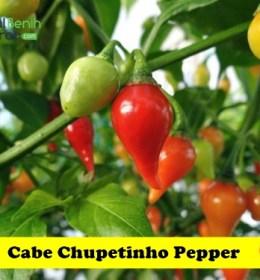 Cabe Chupetinho Pepper