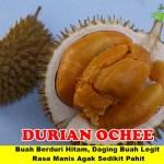 Bibit Durian Duri Hitam 3 kaki 70cm