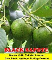 Black Sapote Jumbo