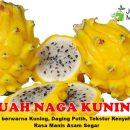 Buah Naga Kuning Unggul