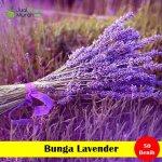 Benih Bunga Lavender (Maica Leaf)