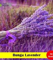 Bunga Lavender Maica leaf