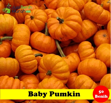 baby pumpkin Maica Leaf