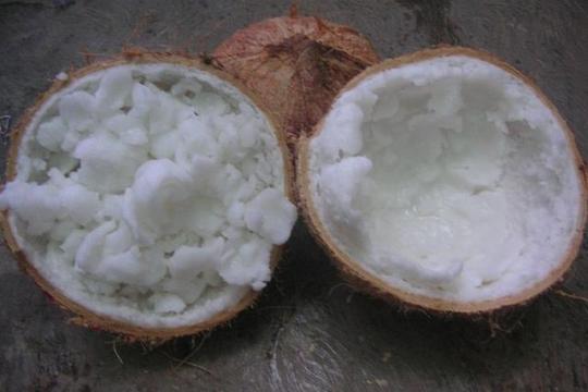 Buah kelapa Kopyor unggul