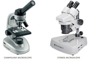 mikroskop-stereo
