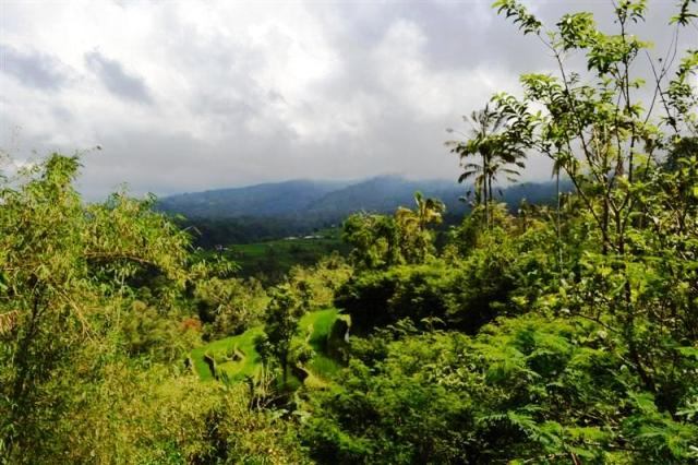 land for sale in tabanan