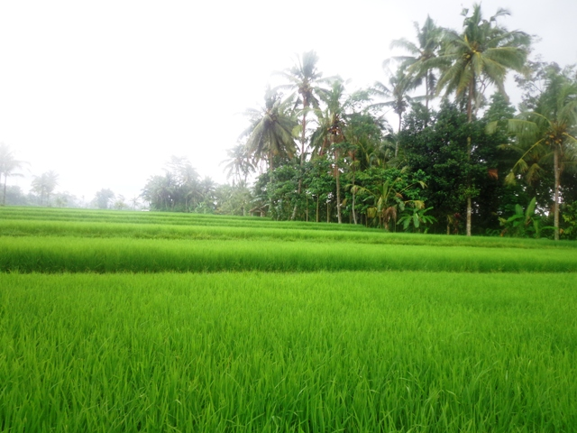 Land for sale in Ubud Tegalalang