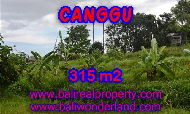 Tanah dijual di Canggu Bali 315 m2 view sawah,sungai di canggu brawa