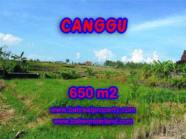 JUAL TANAH DI CANGGU 650 m2 View sawah di Canggu Batu Bolong