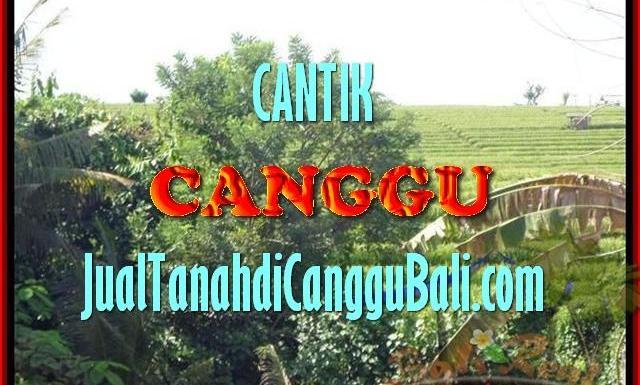 INVESTASI PROPERTY, JUAL TANAH MURAH di CANGGU TJCG143