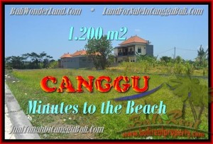 DIJUAL MURAH TANAH di CANGGU 12 Are di Canggu Kayutulang