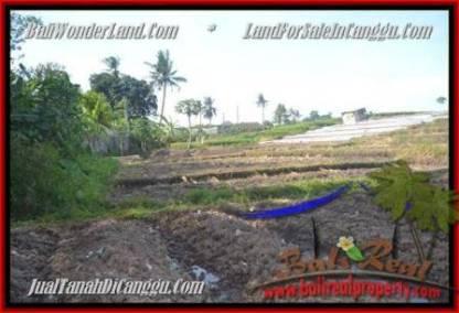 JUAL TANAH di CANGGU 500 m2 View sawah link villa