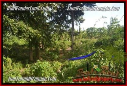 TANAH MURAH di CANGGU JUAL 5 Are View sawah link villa