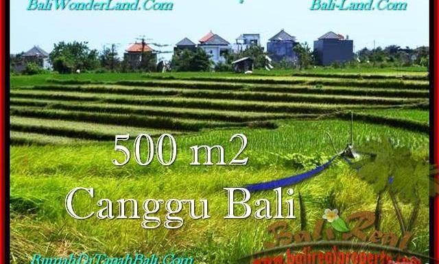 JUAL MURAH TANAH di CANGGU BALI 500 m2 View sawah, lingkungan villa