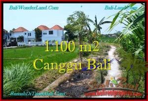 TANAH DIJUAL di CANGGU 11 Are di Canggu Brawa