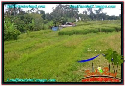 TANAH DIJUAL MURAH di CANGGU BALI 3 Are di Canggu Umalas