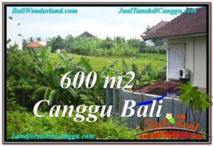 TANAH di CANGGU JUAL 600 m2 View sawah lingkungan villa