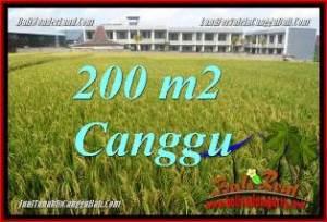 TANAH MURAH DIJUAL di CANGGU 200 m2 di CANGGU BRAWA