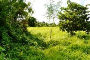 Tanah dijual di Canggu Bali View sawah Dan Pantai Canggu 18 are - TJCG014E