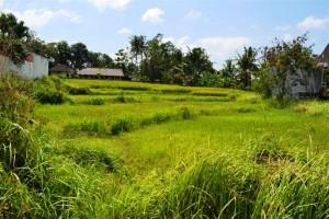 Tanah dijual di Canggu Bali view sawah di Pinggir Jalan Canggu – TJCG053E