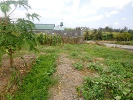 Jual Tanah di Canggu Bali view sawah terasering – TJCG055E