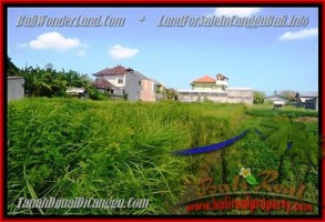 TANAH MURAH DIJUAL di CANGGU BALI Untuk INVESTASI TJCG148