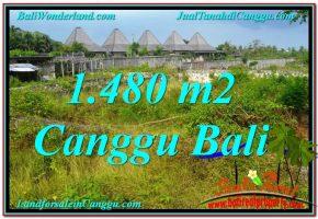TANAH DIJUAL di CANGGU 14.8 Are di Canggu Pererenan