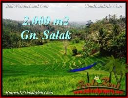 JUAL MURAH TANAH di CANGGU BALI 460 m2  View sawah, lingkungan villa