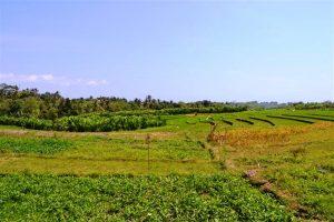 SOLD!!! Jual Tanah di Canggu Bali lokasi di Kerobokan Canggu view sawah – TJCG057E