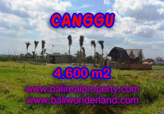 Tanah dijual di Canggu Bali 46 Are di Canggu pererenan