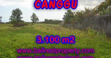 Tanah dijual di Canggu Bali 31 Are di Canggu Batu Bolong