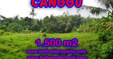 TANAH DIJUAL DI BALI 1,500 m2 di Canggu pererenan