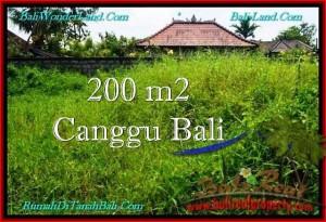 JUAL MURAH TANAH di CANGGU 200 m2 Lingkungan villa