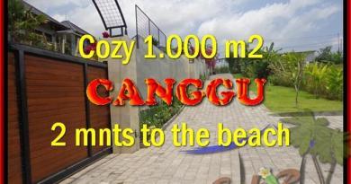 JUAL TANAH di CANGGU 1.000 m2 View Sawah dan sungai , lingkungan villa