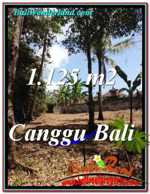 TANAH MURAH di CANGGU BALI 1,125 m2  View Sawah dan tebing sungai