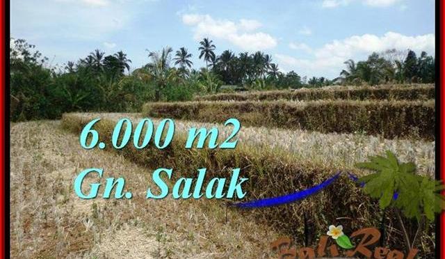 JUAL TANAH di TABANAN BALI 6,000 m2 View Gunung, sawah
