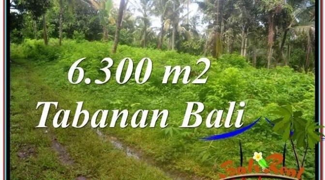 TANAH MURAH di TABANAN BALI DIJUAL 6,300 m2 View kebun