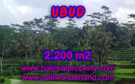 Tanah di Ubud Bali dijual view sawah dan gunung murah di Ubud Payangan