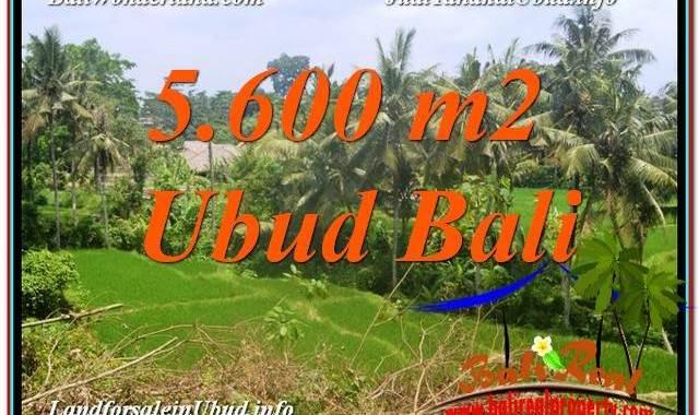 TANAH DIJUAL MURAH di UBUD BALI Untuk INVESTASI TJUB636