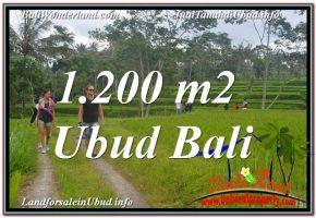 TANAH di UBUD BALI DIJUAL MURAH 1,200 m2 di Ubud Tegalalang